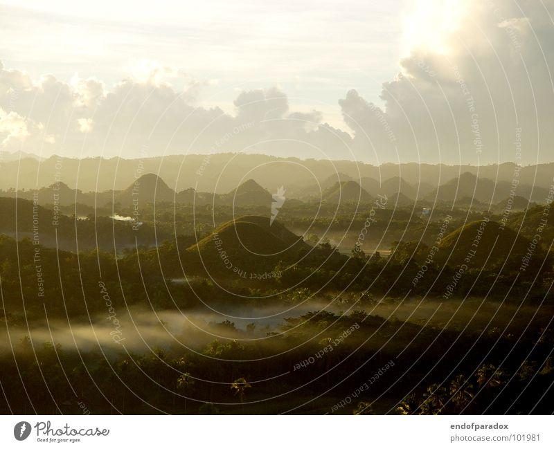 wake up... Natur grün Ferien & Urlaub & Reisen ruhig Farbe Wald Beleuchtung Nebel Trauer Frieden Asien Verzweiflung Palme sanft harmonisch friedlich