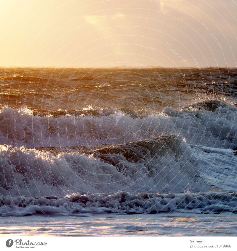 Delfin gesucht Umwelt Natur Urelemente Wasser Himmel Sonnenaufgang Sonnenuntergang Sonnenlicht Sommer Schönes Wetter Wellen Küste Nordsee Meer glänzend leuchten