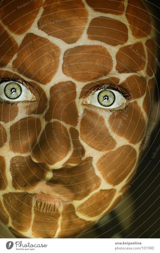 safari Safari Wimpern Tier Afrika Säugetier Giraffe wildlife Fleck Mund kulleräugig Auge Hals flunsch self