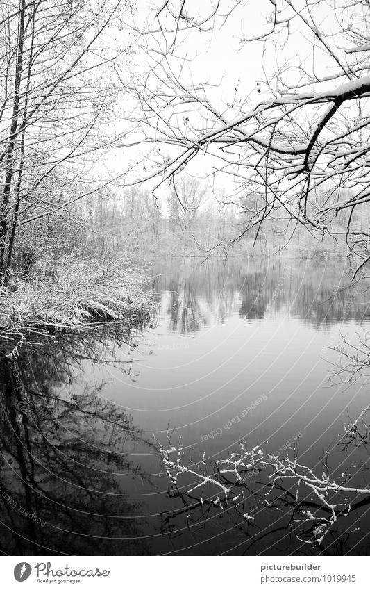 Am See Winter Schnee Natur Eis Frost Baum Seeufer Einsamkeit kalt ruhig Schwarzweißfoto Außenaufnahme Textfreiraum unten Textfreiraum Mitte Morgen