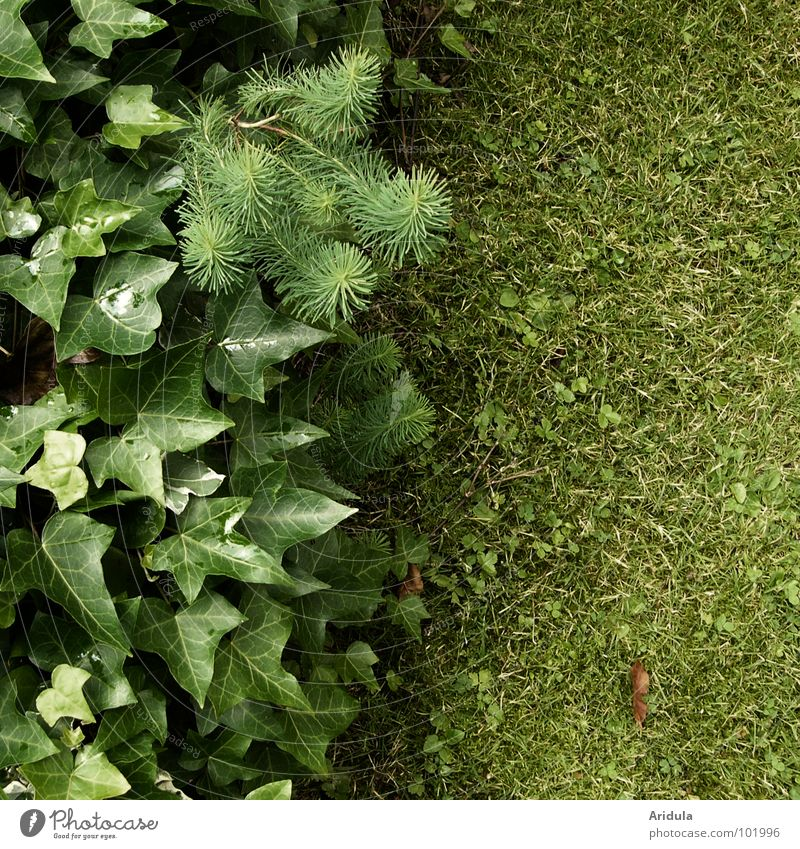 grüüüüünnn grün Efeu Blatt Halm Ecke Strukturen & Formen Pflanze Sommer Garten Park Rasen Natur Ordnung