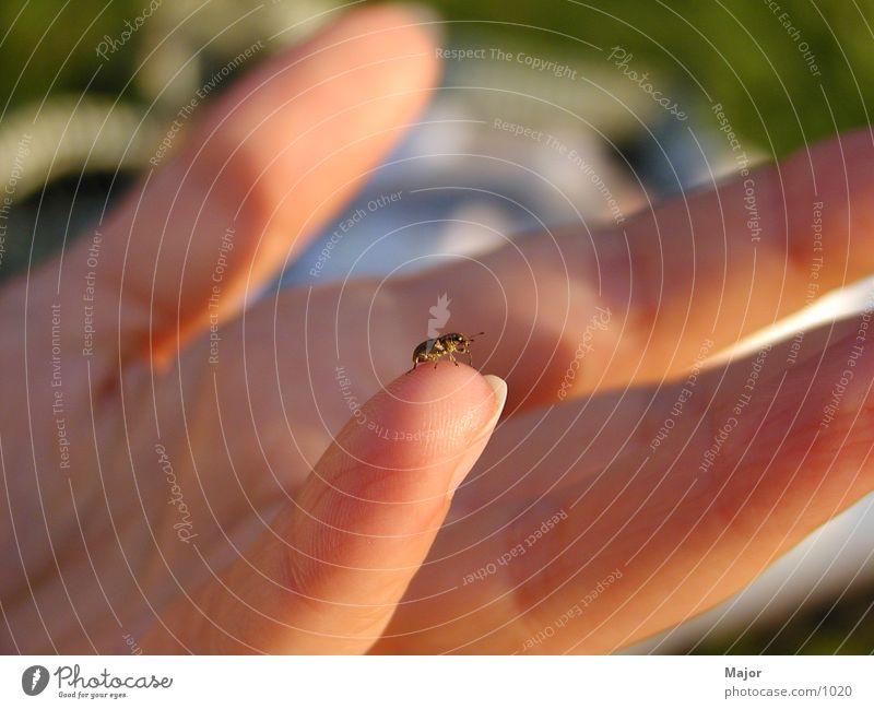 Käfer - Makro Hand Käfer Makroaufnahme