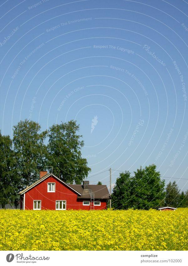 blau, grün, rot und gelb schön Ferien & Urlaub & Reisen Sommer Haus Landwirtschaft Forstwirtschaft Kabel Klima Wetter Baum Feld Hütte Fenster einfach Idylle