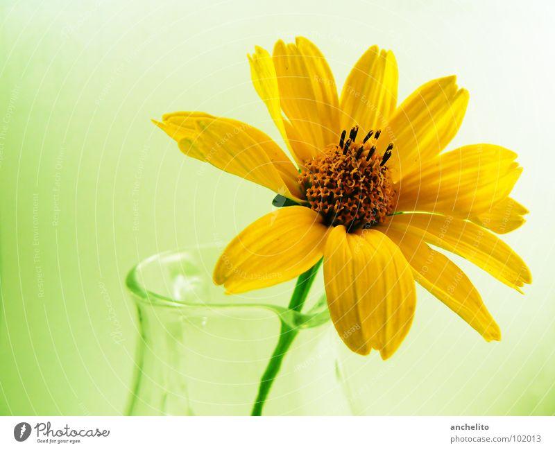 Cellophane flowers of yellow and green ... Blüte Pflanze Natur Blume grün gelb schön ruhig zart weich Frieden Makroaufnahme Gefühle Frühling blossom bloom Glas