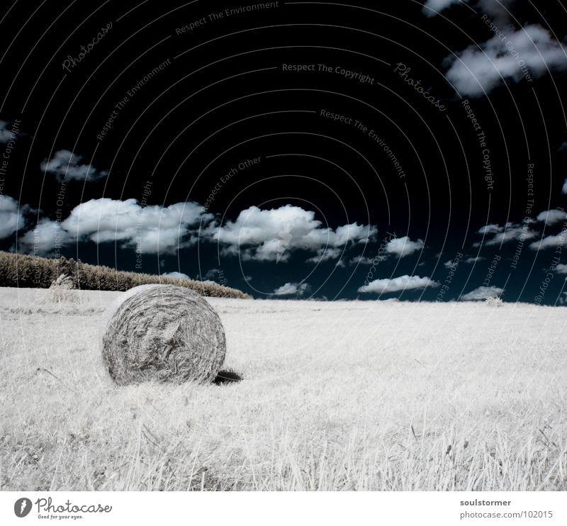 Heuballen mal anders... Infrarotaufnahme Farbinfrarot Schwarzfilter Wolken schwarz weiß Holzmehl Licht Gras Wiese Pflanze grün Baum Waldrand Wäldchen Futter