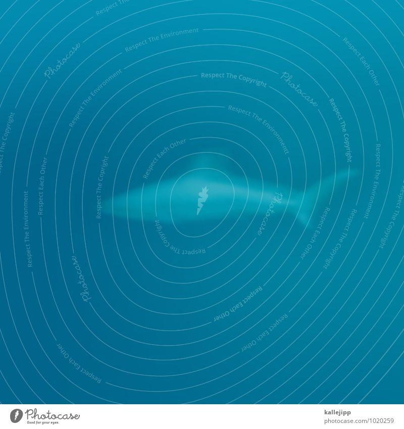 hi! Natur blau Wasser Meer Tier Umwelt Schwimmen & Baden Wildtier bedrohlich tauchen Haifisch Flosse Raubfisch