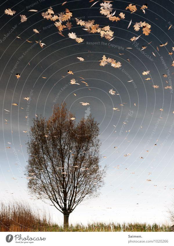 Ode an den Herbst und die Vergänglichkeit Umwelt Natur Landschaft Pflanze Wasser Himmel Baum Blatt See außergewöhnlich natürlich Idylle Stimmung