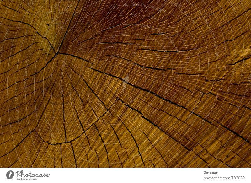 Holta Natur Baum Pflanze ruhig dunkel Holz braun Hintergrundbild einfach Baumstamm sehr wenige Fichte Holzmehl