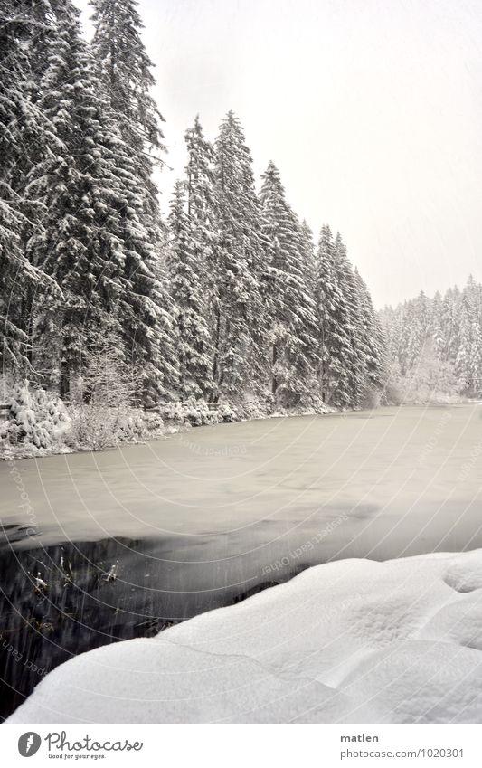 Schneefall Natur Landschaft Pflanze Himmel Wolken Winter Wetter Eis Frost Baum Wald Seeufer Menschenleer braun schwarz weiß ruhig zufrieren Schwarzwald Farbfoto