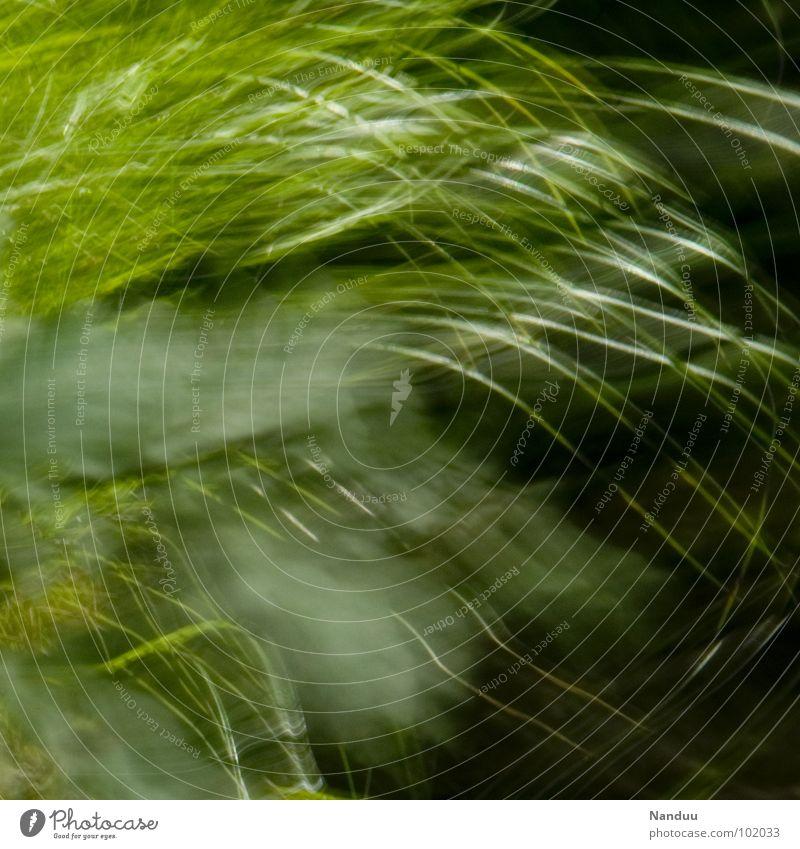 sanft entgleiten Halm Wiese abstrakt Unschärfe grün weich kuschlig ruhig Erholung Sommer Hintergrundbild Quadrat zerbrechlich Vergänglichkeit flüchtig schlafen