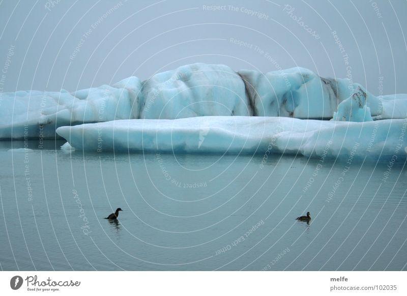 neulich im Norden... Eissee kalt frieren nass ruhig schmelzen grau Winter Ente Wasser blau friedlich Himmel paarweise Tierpaar Im Wasser treiben