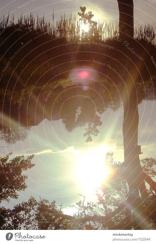 spieglein spieglein was für ein spruch Reflexion & Spiegelung Baum Wald Gras See Teich wandern Sommer Frühling Sonne Pflanze Baumkrone Beleuchtung Linse