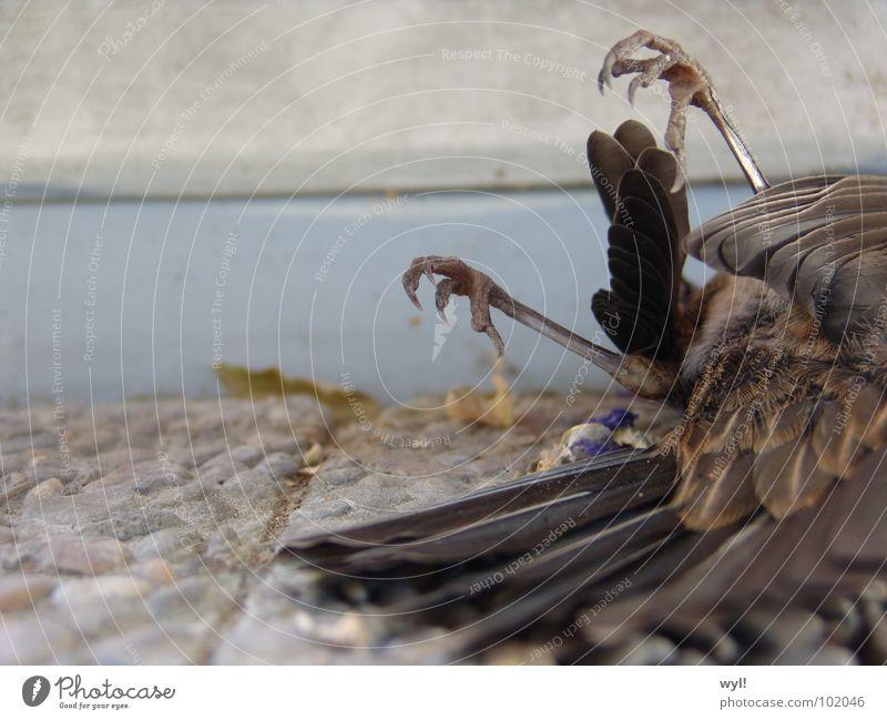 Arme Amsel Vogel Krallen Schwanz geschlossene Augen kalt Trauer Fenster Schnabel Beton Verzweiflung Feder Fuß Tod Rücken Schwanzfedern Traurigkeit Einsamkeit