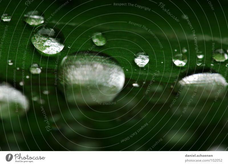 Regentropfen 2 Pflanze grün Wasser weiß Blatt Hintergrundbild Linie Regen glänzend Wachstum rund Klarheit durchsichtig Kugel Blattgrün
