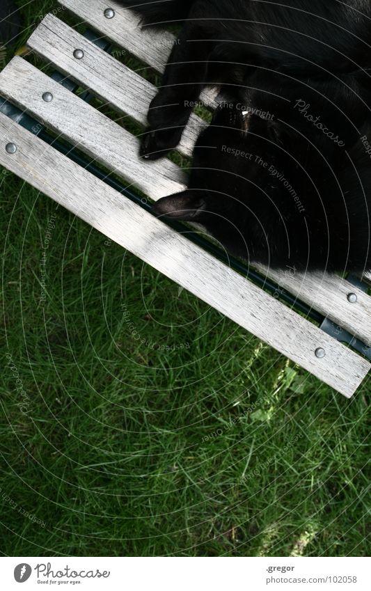 to have a hangover Katze Mull Pfote schlafen ruhen ruhig gemütlich schwarz grün Gartenstuhl Frieden Säugetier Hauskatze geschlafen gepennt ratzen geratzt