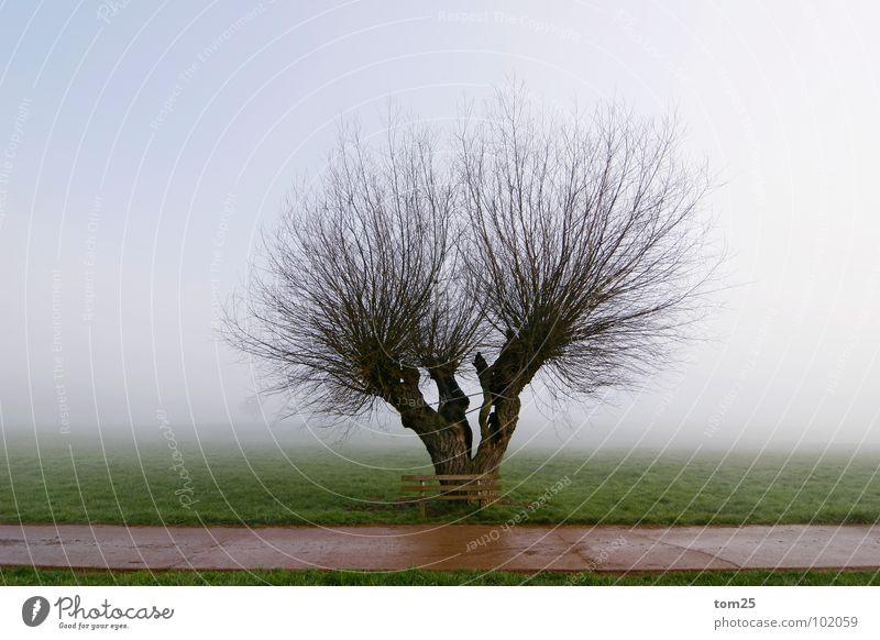 Struwwelpeter Himmel alt grün Baum Einsamkeit Wiese Wege & Pfade Nebel Bank Ast Frieden gebrochen Trennung Tau