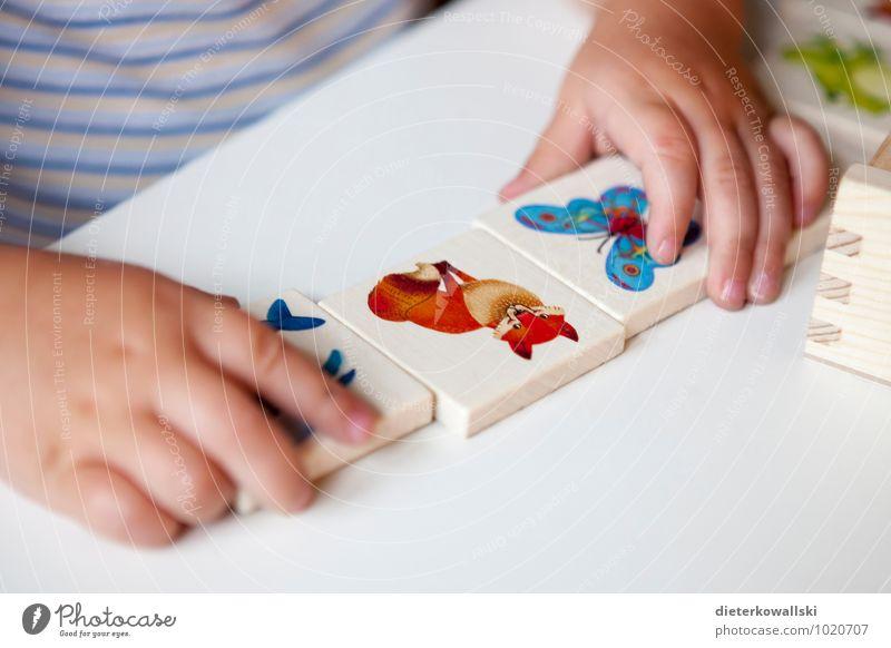 Kleine Hände Spielen Kinderspiel Bildung lernen Hand Finger 1-3 Jahre Kleinkind Fuchs Kindheit Kinderhand Memory Farbfoto Innenaufnahme