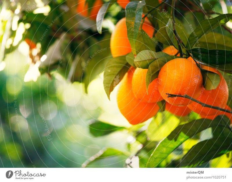 Orangenduft. Natur grün Gesunde Ernährung Umwelt Gesundheit orange ästhetisch Klima lecker Spanien Mallorca reif Vitamin C Baum Orangensaft