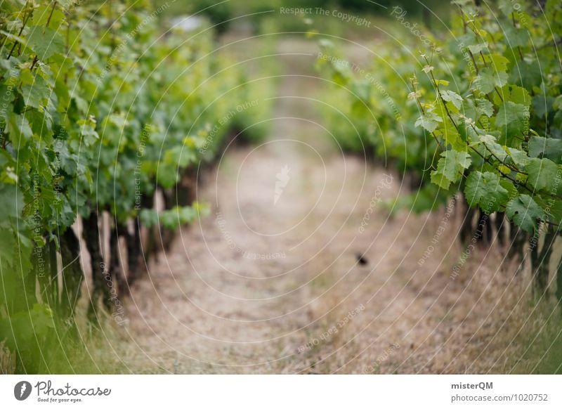 Weinhang. Landschaft Weinberg Weinbau Weinlese Weingut Wege & Pfade grün Farbfoto Gedeckte Farben Außenaufnahme Tag Schwache Tiefenschärfe Zentralperspektive
