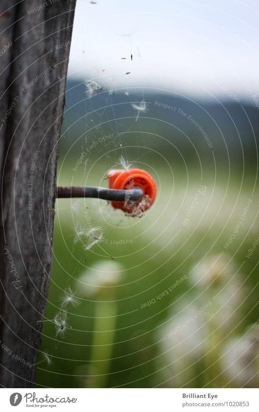 Veralteter isolator umwebt mit Spinnennetz Natur Pflanze grün Sommer Erholung rot Landschaft Umwelt Wiese Frühling Holz Freiheit Stimmung Feld authentisch weich