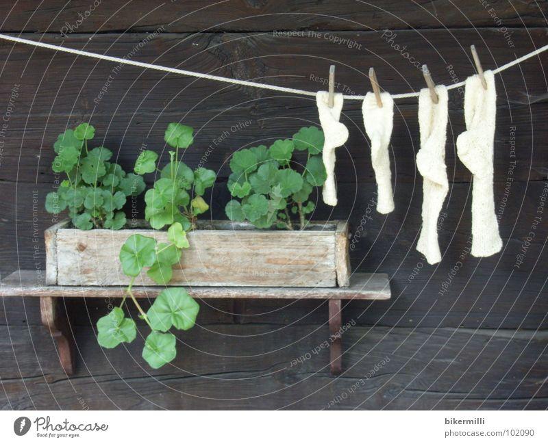 die gute alte zeit Holzhaus Holzwand Pflanze Blume Brise Wäscheleine fadenförmig Wolle Physik weich kuschlig Strümpfe braun grün weiß Regal Pause Schrebergarten