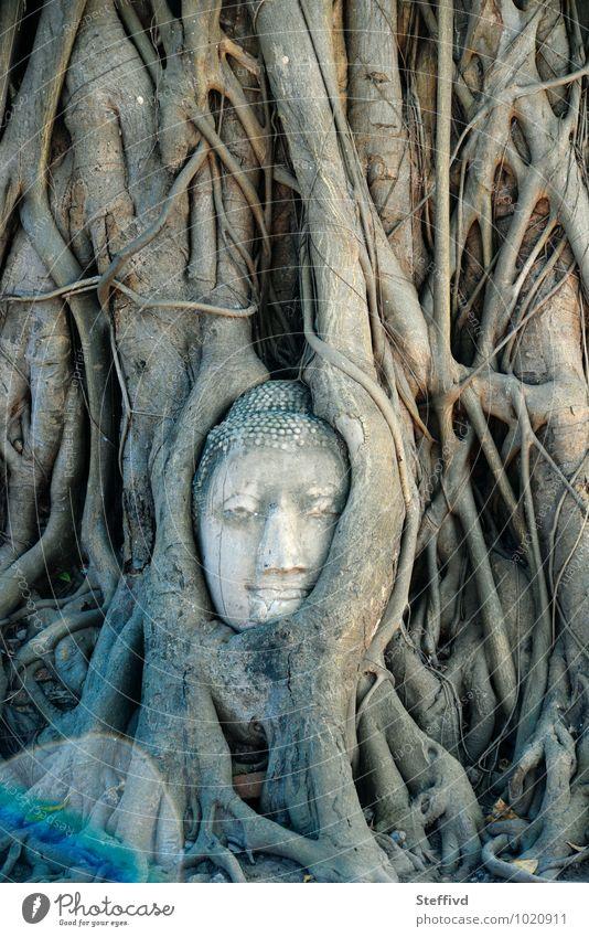 Natur Pflanze Baum Holz Kunst Abenteuer Kultur Macht Vertrauen exotisch Skulptur Tatkraft Tempel Buddhismus Esprit Spiritualität
