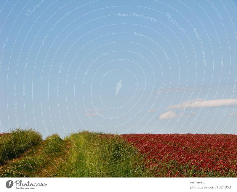 der stille weg Himmel Natur blau grün Sommer Erholung rot Landschaft ruhig Ferne Gras Horizont Zufriedenheit Beginn Fußweg Klee
