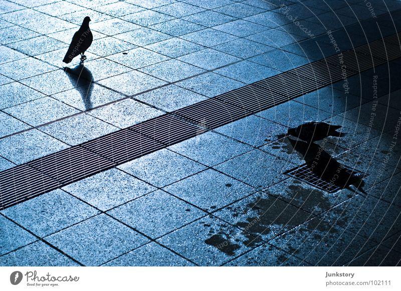 Ost und West bei Nacht Wasser blau schwarz dunkel kalt Stein Linie Vogel glänzend Beton Grenze obskur Mond Bahnhof Taube Trennung