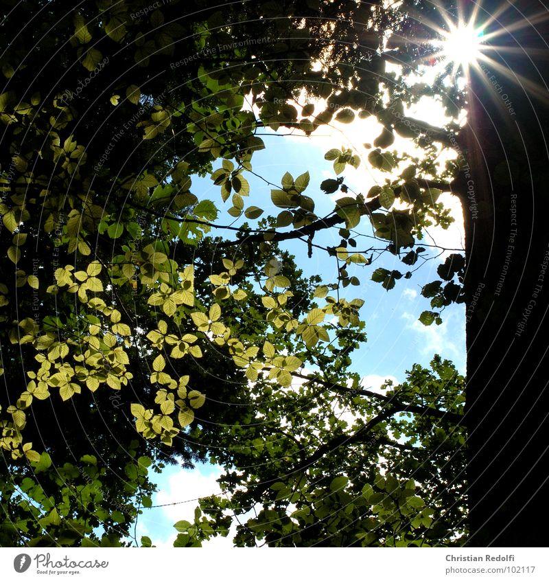 Shiny Leaves Wald Baum Sonne Schatten Blatt Geäst Himmel Strahlung Baumstamm grün gelb Holz Natur Trauer Verzweiflung Sommer lime-green lassen