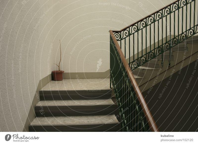 vergessen grün Pflanze Einsamkeit kalt grau braun Treppe Treppenhaus Topf Haushalt