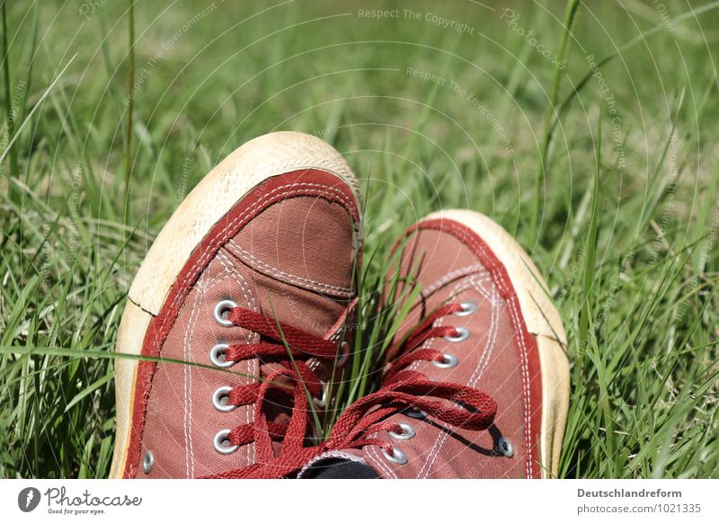 summer time Lifestyle Stil Wohlgefühl Zufriedenheit Erholung Sommer Sonne Wiese Mode Schuhe Turnschuh Chucks grün rot Coolness Gelassenheit ruhig Converse