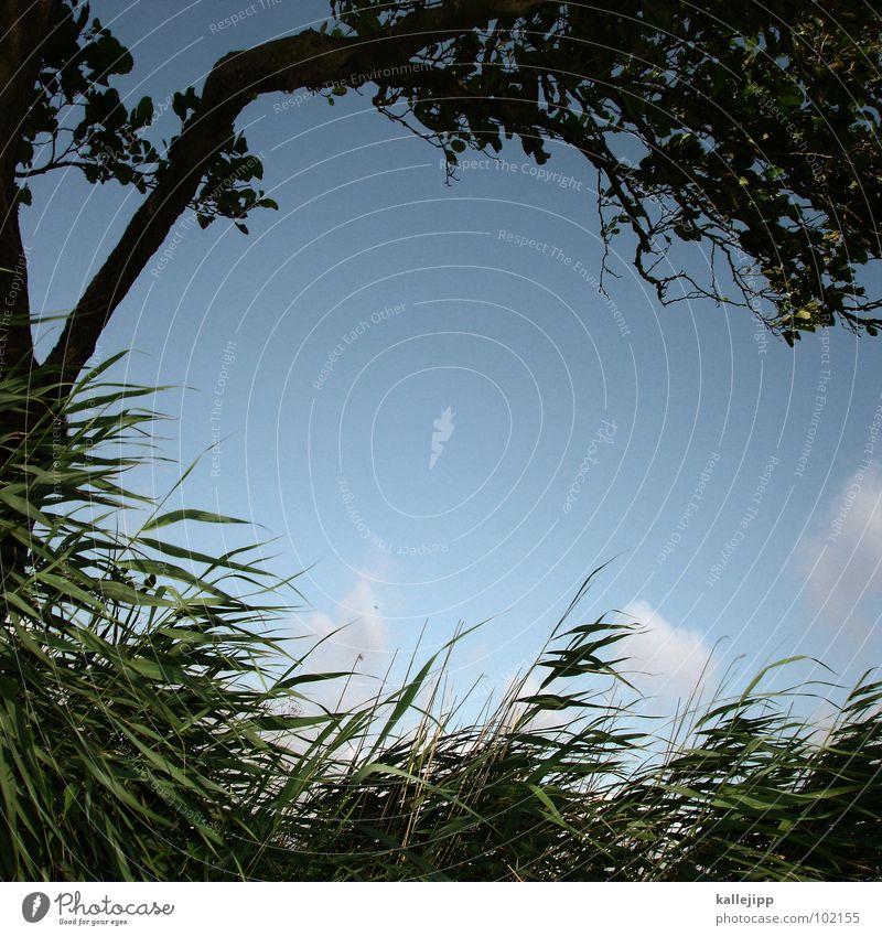the summerwind... Himmel Natur Wasser grün Baum Ferien & Urlaub & Reisen Pflanze Strand Erholung Gras Küste Sand See Luft Wetter Wind