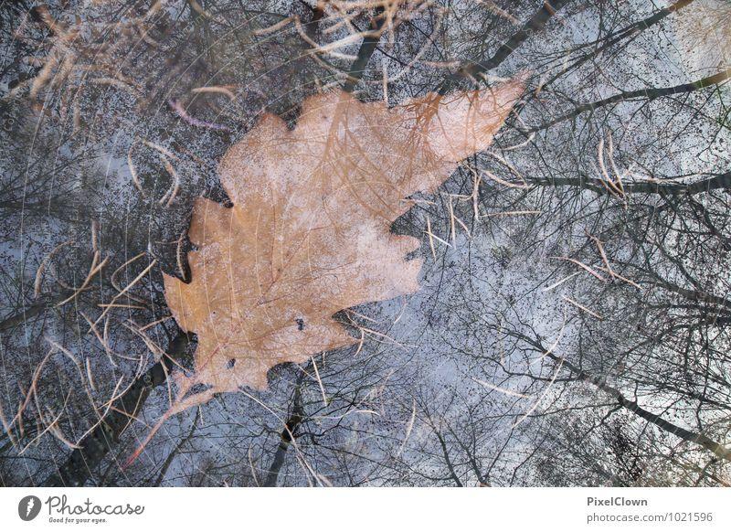 Loses Blattwerk Natur Ferien & Urlaub & Reisen Pflanze schön Baum Landschaft ruhig Tier Wald Gefühle Stil Stimmung braun Kunst Wachstum