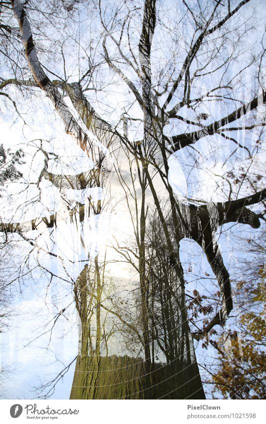 Baumbestand Natur Ferien & Urlaub & Reisen Pflanze grün Sommer Landschaft Blatt Tier Wald Gefühle Stil Holz außergewöhnlich Kunst Park