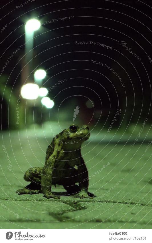SpaceFrog grün Nachtaufnahme Langzeitbelichtung Bürgersteig Laterne Tier außergewöhnlich bedrohlich Körperhaltung Verhalten drohhaltung Kröte space aufgebäumt