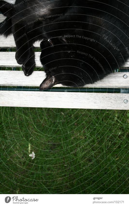 to have a hangover 2 Katze Mull Pfote schlafen ruhen ruhig gemütlich schwarz grün Gartenstuhl Frieden Säugetier Hauskatze geschlafen gepennt ratzen geratzt