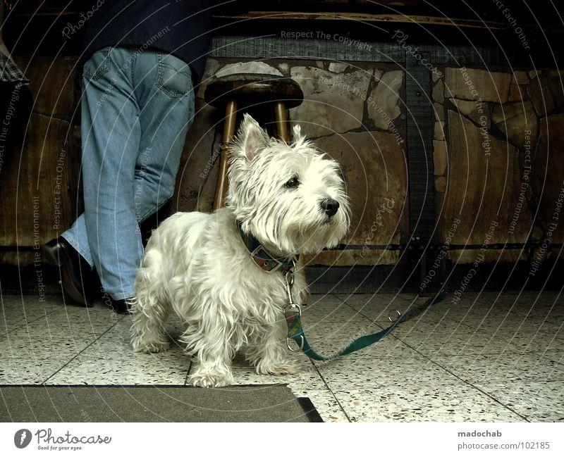 CO-ABHÄNGIGKEIT Mann Tier Auge Hund Beine Deutschland Freizeit & Hobby warten Seil Suche süß stehen Jeanshose Bar Schutz Gastronomie