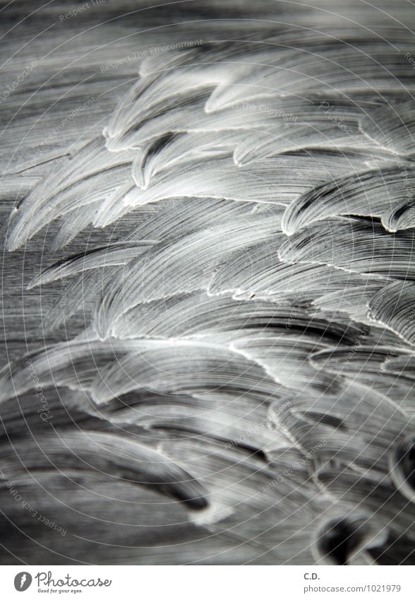 Reiniger auf Cerankochfeld Glas Kunststoff Wasser nass abstrakt gewischt Wischen cerankochfeld Herd & Backofen Schwarzweißfoto Menschenleer