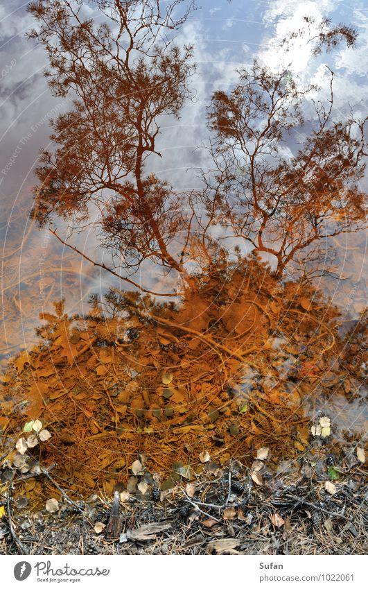 Wasser-Farbe-Spiegel ruhig Umwelt Natur Erde Wolken Sommer Herbst Schönes Wetter Baum Blatt Kiefer Ast Himmel Reisig Wald Seeufer Holz Rost beobachten entdecken