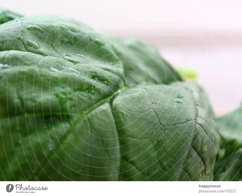 spinat grün Blatt Spinat Makroaufnahme Spinatblatt frisch Gesunde Ernährung Gesundheit Vegetarische Ernährung Vegane Ernährung