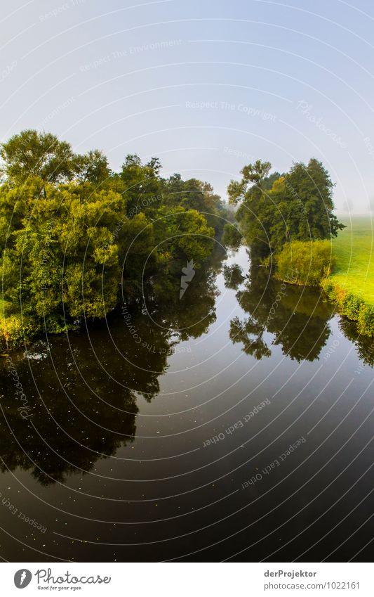 Morgens im Herbst am Fluss Ferien & Urlaub & Reisen Tourismus Ausflug Abenteuer Umwelt Natur Landschaft Pflanze Tier Urelemente Schönes Wetter Nebel Baum