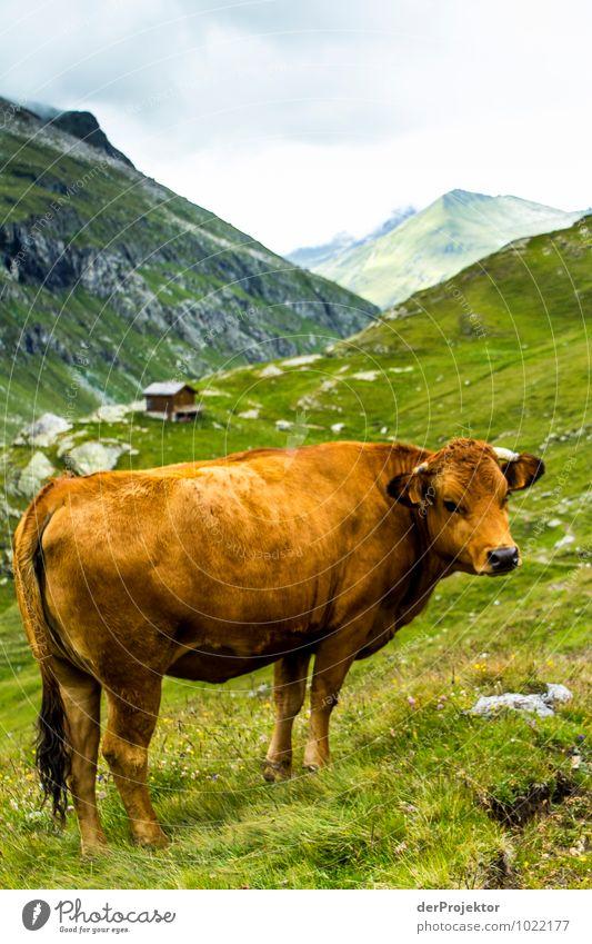 Hier kommst du nicht lang Natur Ferien & Urlaub & Reisen Pflanze Sommer Landschaft Tier Ferne Berge u. Gebirge Umwelt Gefühle Wiese Freiheit Tourismus Feld