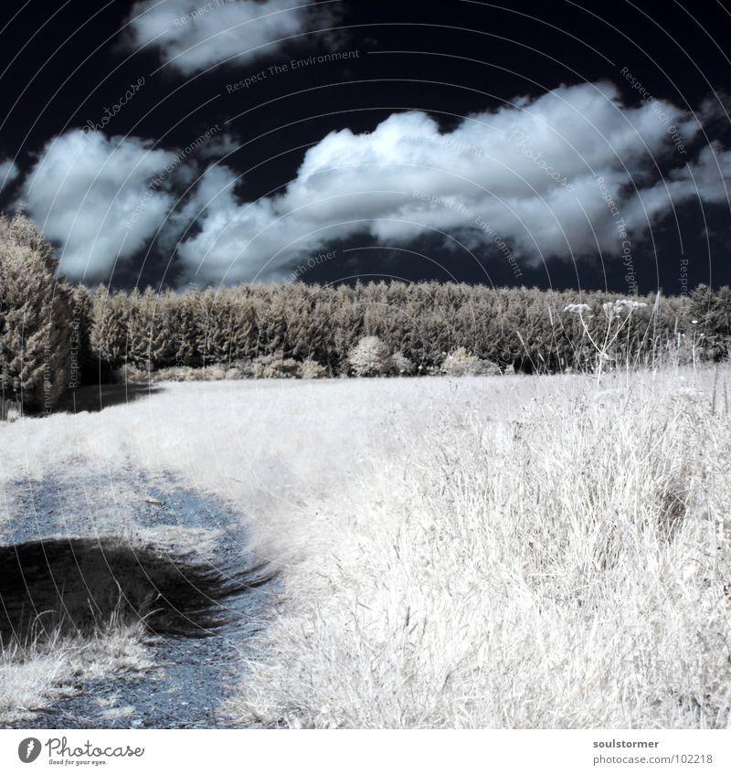 Der Weg nach oben... Infrarotaufnahme Farbinfrarot Schwarzfilter Wolken schwarz weiß Holzmehl Licht Gras Wiese Pflanze grün Baum Wald Waldrand Wäldchen Infarot