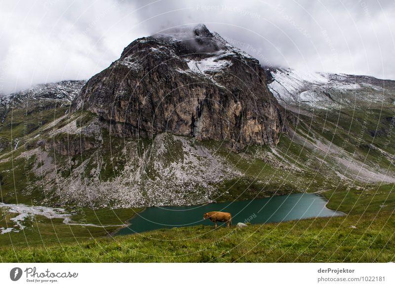 Da steht eine Kuh vorm Berg Freizeit & Hobby Ferien & Urlaub & Reisen Tourismus Abenteuer Ferne Freiheit Berge u. Gebirge Umwelt Natur Landschaft Pflanze Tier