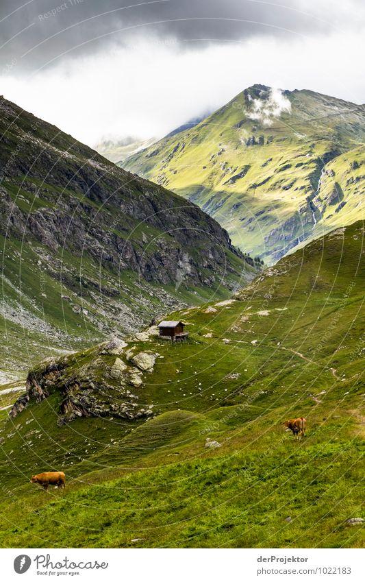 Idylle vor dem Unwetter Natur Ferien & Urlaub & Reisen Pflanze Sommer Landschaft Tier Ferne Berge u. Gebirge Umwelt Wiese Freiheit Felsen Tourismus Feld Ausflug