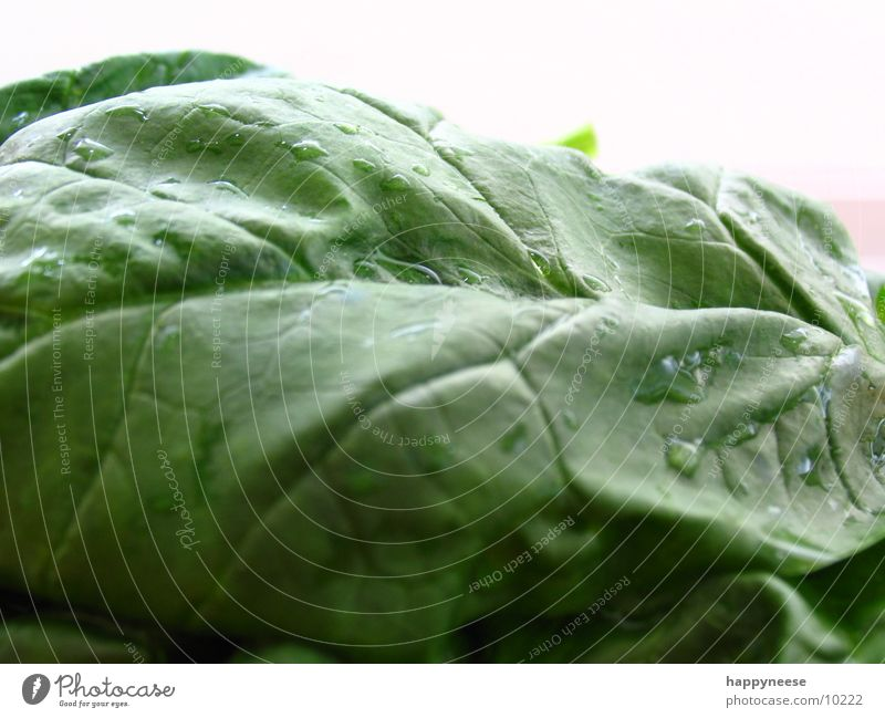 nochmal spinat grün Blatt Spinat Makroaufnahme Spinatblatt Gesunde Ernährung Gesundheit Vegetarische Ernährung Vegane Ernährung frisch
