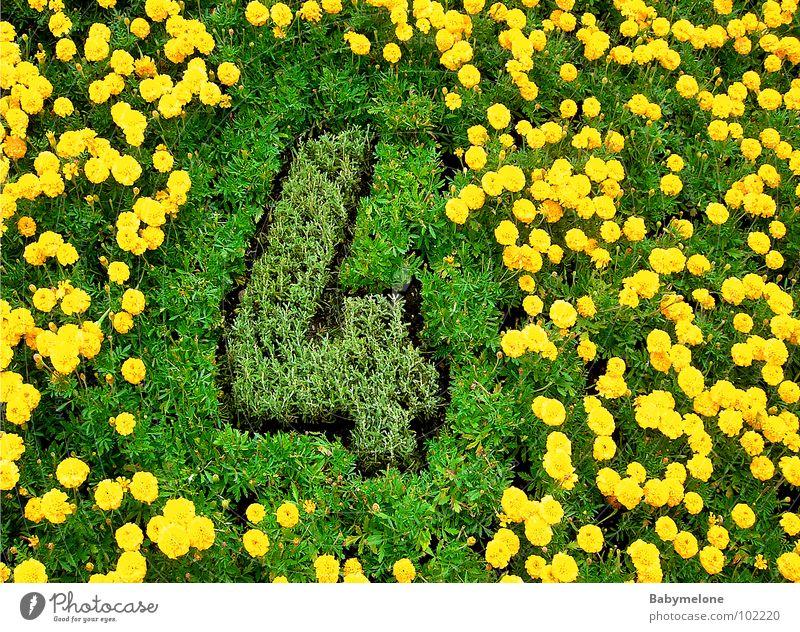 blumige vier Blume 4 Ziffern & Zahlen Kunstwerk Genf gelb grün geschmackvoll Frühling Wiese Natur Blumenuhr Garten Rasen Detailaufnahme ästhetisch viel Arbeit