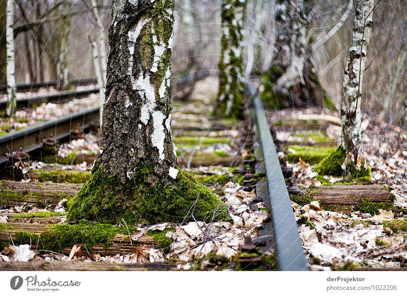 Es fährt kein Zug nach nirgendwo Natur Ferien & Urlaub & Reisen Pflanze Landschaft Ferne Wald Umwelt Gefühle Berlin Freiheit Park Tourismus Angst