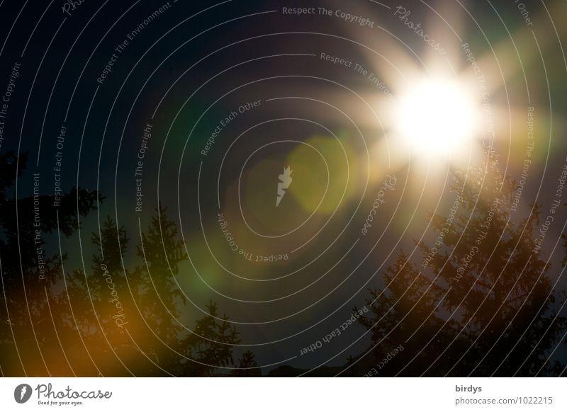 BeSonnenheit Himmel Nachthimmel Vollmond Tanne leuchten ästhetisch außergewöhnlich dunkel hell Kraft Hoffnung träumen Wandel & Veränderung Unschärfe Licht