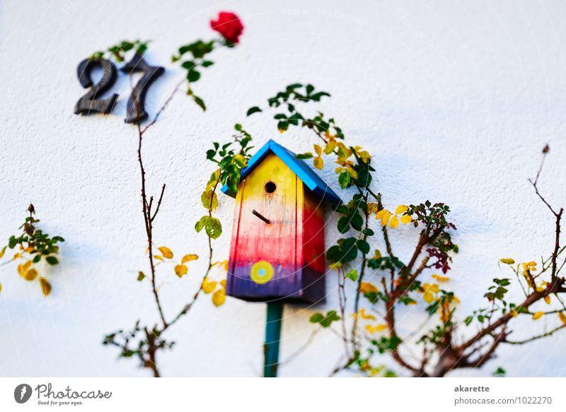 Vogelkasten Nistkasten Holz hängen schlafen einzigartig blau gelb orange rot Frühlingsgefühle Sicherheit Schutz Gastfreundschaft Leben Neugier träumen Heimweh